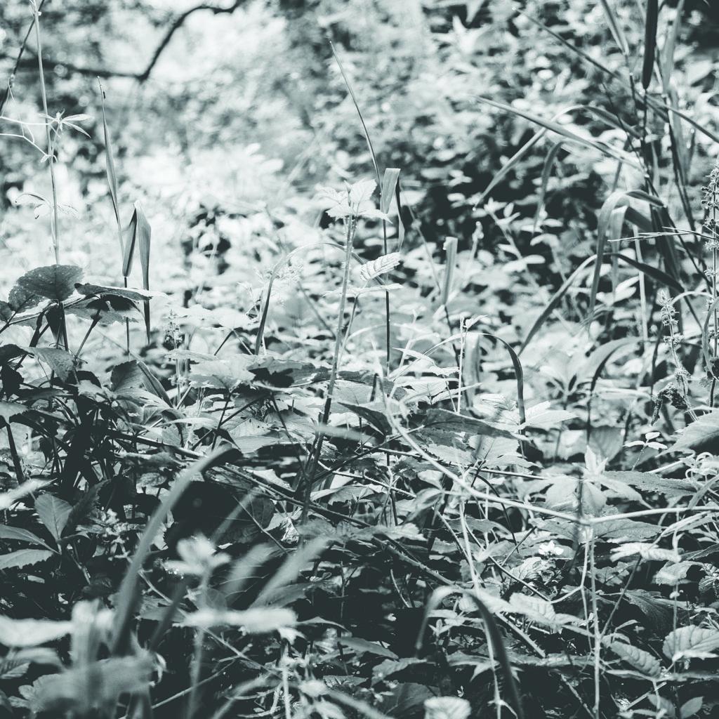 flore ripisylve