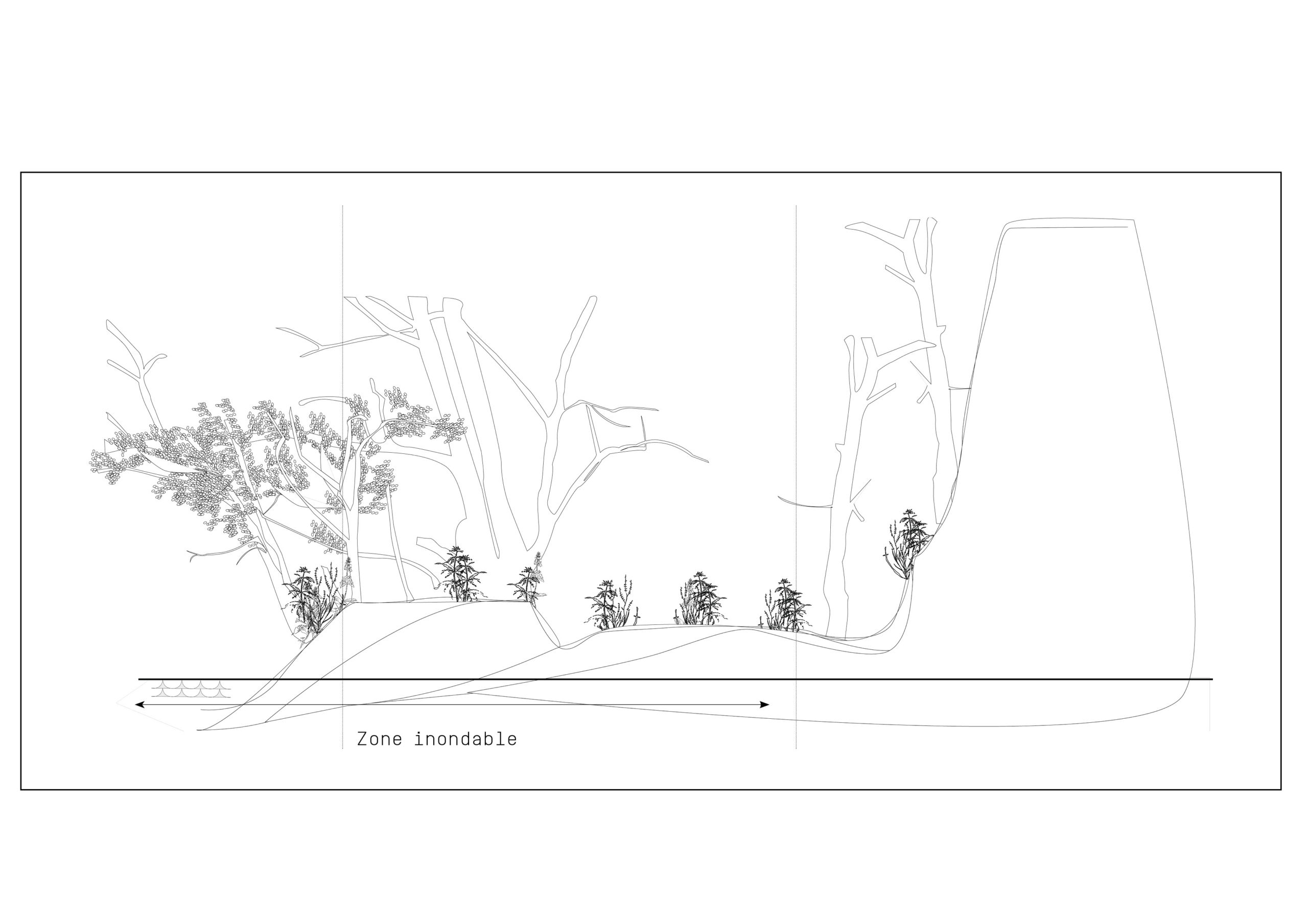 flore de ripisylve